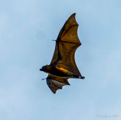 Bat by the labyrinth