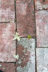 Life poking through the cracks in the labyrinth